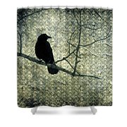 Crow Knows Shower Curtain