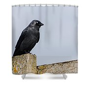 Crow Perched On A Fence Shower Curtain