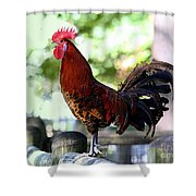 Crowing Red Junglefowl Rooster Shower Curtain