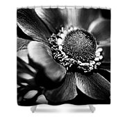 Crown Anenome Shower Curtain