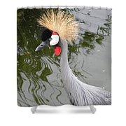 Crown Bird 1 Shower Curtain