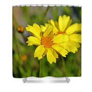 Crown Daisies  Shower Curtain