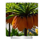 Crown Imperial Flowers Shower Curtain
