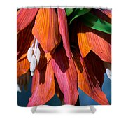 Crown Imperial Shower Curtain