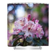 Crown Of Rhodies Shower Curtain
