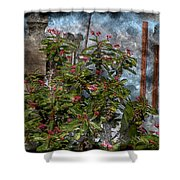 Crown Of Thorns - Featured In Beauty Captured And Nature Photography Groups Shower Curtain