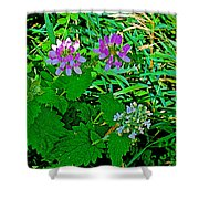 Crown Vetch And Catnip In Pipestone National Monument-minnesota Shower Curtain
