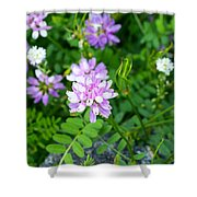 Crown Vetch Wildflowers Shower Curtain