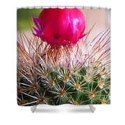 Crowned Beauty Shower Curtain