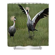 Crowned Cane Courtship Display Shower Curtain