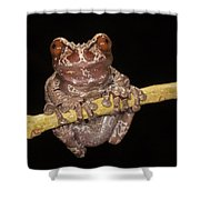 Crowned Frog Costa Rica Shower Curtain