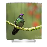 Crowned Hummingbird Shower Curtain