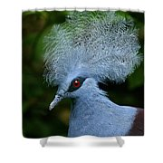 Crowned Pigeon Goura Cristata, Bali Shower Curtain