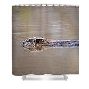 Cruisin' Beaver Shower Curtain