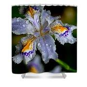 Crying Fringed Iris-iris Japonica Shower Curtain