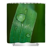 Crying Grass - Featured 2 Shower Curtain