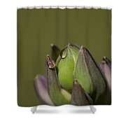 Crying Hostas Shower Curtain