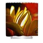 Crystal Ball Project 105 Shower Curtain