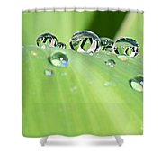 Crystal Clear Shower Curtain