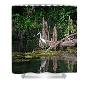 Crystal River Egret Shower Curtain by Skip Willits