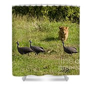 Cub And Toys Shower Curtain
