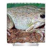Cuban Tree Frog Osteopilus Shower Curtain