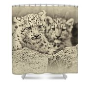 Cubs At Play Shower Curtain