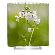 Cuckooflower Shower Curtain