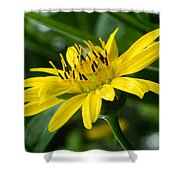 Cup Flower Shower Curtain