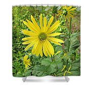 Cup Plant Blooms Shower Curtain