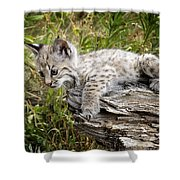 Curiosity Shower Curtain