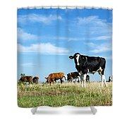 Curious Bull Shower Curtain