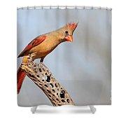 Curious Cardinal Shower Curtain