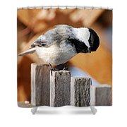 Curious Chickadee Shower Curtain