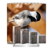 Curious Chickadee Shower Curtain