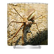 Curious One Shower Curtain