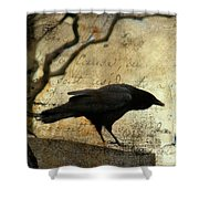 Curious Crow Shower Curtain