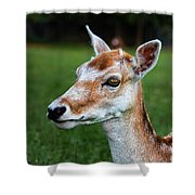 Curious Doe Shower Curtain by Mariola Bitner
