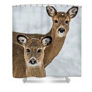 Curious Does Shower Curtain
