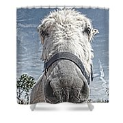 Curious Donkey Shower Curtain