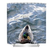 Curious Duck Shower Curtain