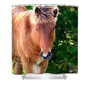 Curious Foal Shower Curtain