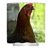 Curious Hen Shower Curtain