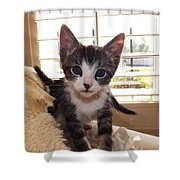 Curious Kitten Shower Curtain