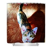 Curious Kitty Shower Curtain