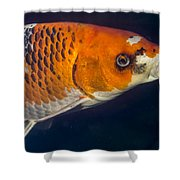 Curious Koi Shower Curtain