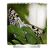 Curious Paper Kite Shower Curtain