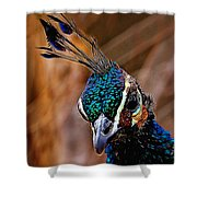 Curious Peacock Digital Art Shower Curtain