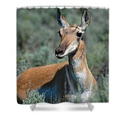 Curious Pronghorn Shower Curtain