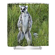 Curious Ring-tail Shower Curtain